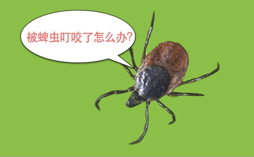 被蜱虫叮咬了怎么办?